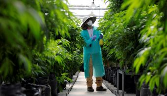 Skrben pregled konoplje za medicinsko uporabo. An employee tends to medical cannabis plants at Pharmocann, an Israeli medical cannabis company in northern Israel January 24, 2019. Picture taken January 24, 2019. REUTERS/Amir Cohen - RC116A4F32D0 FOTO: Amir Cohen Reuters